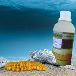 20 Khasiat Teripang Laut atau Sea Cucumber Bagi Kesehatan Anda