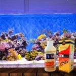 5 Manfaat Sehat Pelihara Ikan Akuarium Dirumah