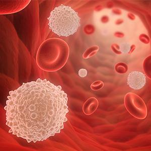 Obat Herbal Untuk Kanker Darah Atau Leukimia - Jelly Gamat ...