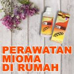 Obat Herbal Miom Jelly Gamat Original